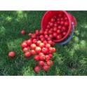 Pachet 10 kg rosii crescute pe crenguta Gradina Pukka