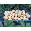 Pachet 10 kg cartofi Gradina Pukka